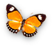 dsgn_411_butterfly.png